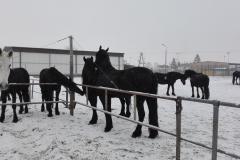 konie_01