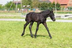 konie_05