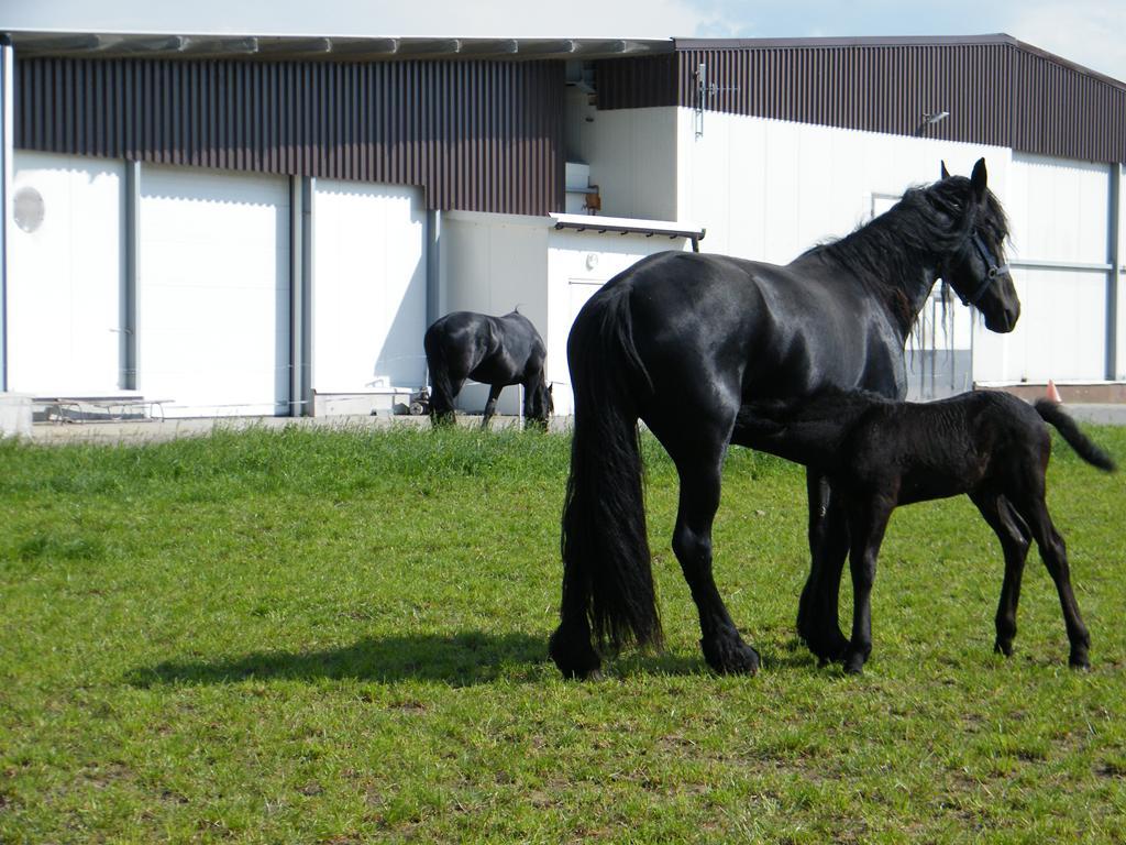konie_06