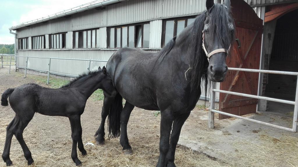 konie_08