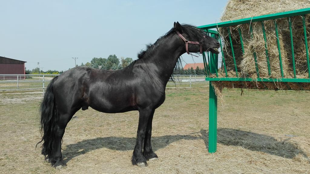 konie_09